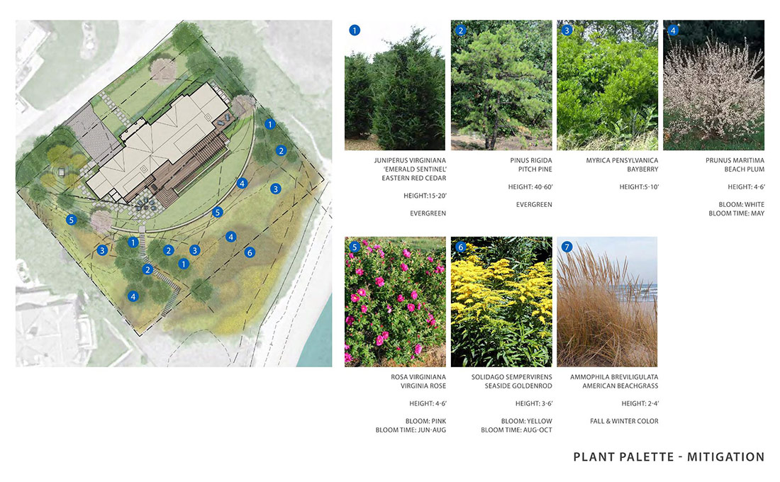 Studio 2112 Design Review and Permitting: BHAC submission of NOI filing showing native flowers and plants used in a project